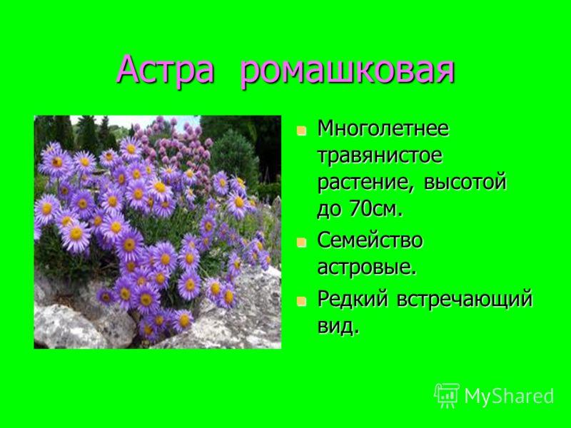 Астра ромашковая Многолетнее травянистое растение, высотой до 70см. Многолетнее травянистое растение, высотой до 70см. Семейство астровые. Семейство астровые. Редкий встречающий вид. Редкий встречающий вид.