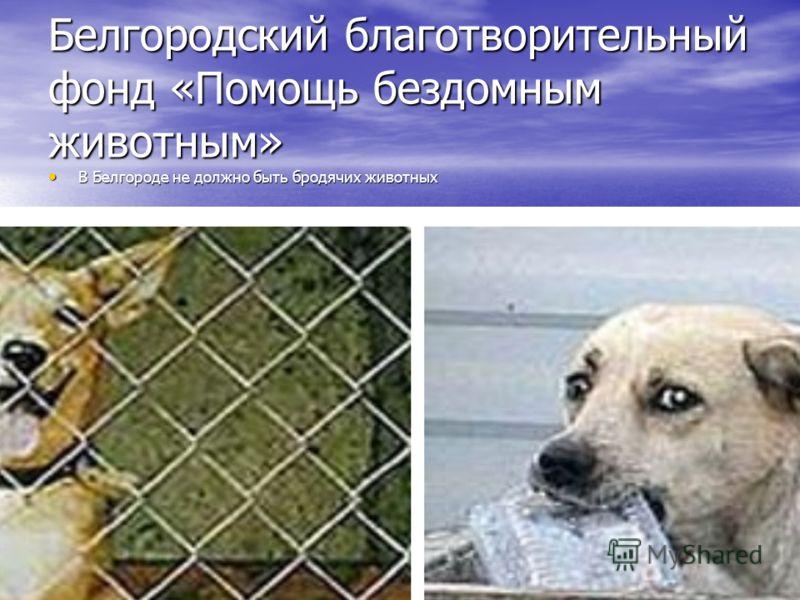 Белгородский благотворительный фонд «Помощь бездомным животным» В Белгороде не должно быть бродячих животных В Белгороде не должно быть бродячих животных Практически каждый день все мы видим на улицах бездомных животных. Бродячие собаки, одичавшие ко