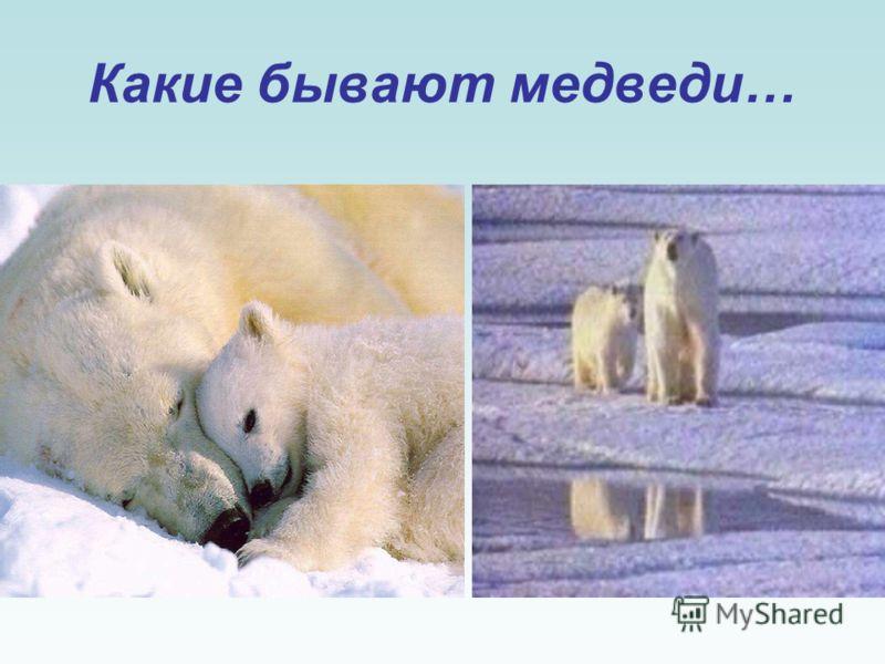Вопреки распространенному мнению, медведи в настоящую спячку не погружаются. Их состояние правильнее называть зимним сном, ибо они сохраняют полную жизнеспособность, чуткость, в случае опасности покидают берлогу и после блужданий по лесу занимают нов
