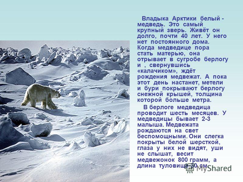 Медведя знают все. Он – «хозяин леса». Это очень крупное, сильное, мощное и хищное животное. В высоту он может достигать 2-3 метров. Бывают медведи бурые, которые живут в лесах, и белые, которые живут в снегах. Зимой медведь спит; в это время у него
