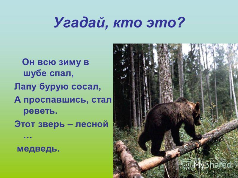 Хочу пригласить вас сегодня в лес. В добрый лес, могучий лес, Полный сказок и чудес. Если внимательны будете, дети, Чудные тайны откроете эти.