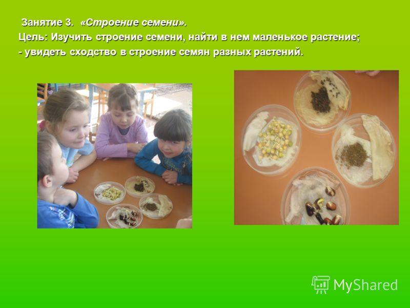 Занятие 3. «Строение семени». Занятие 3. «Строение семени». Цель: Изучить строение семени, найти в нем маленькое растение; Цель: Изучить строение семени, найти в нем маленькое растение; - увидеть сходство в строение семян разных растений. - увидеть с