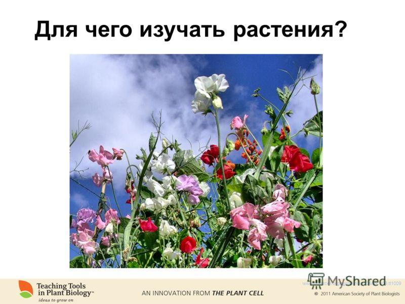 Для чего изучать растения? www.plantcell.org/cgi/doi/10.1105/tpc.109.tt1009