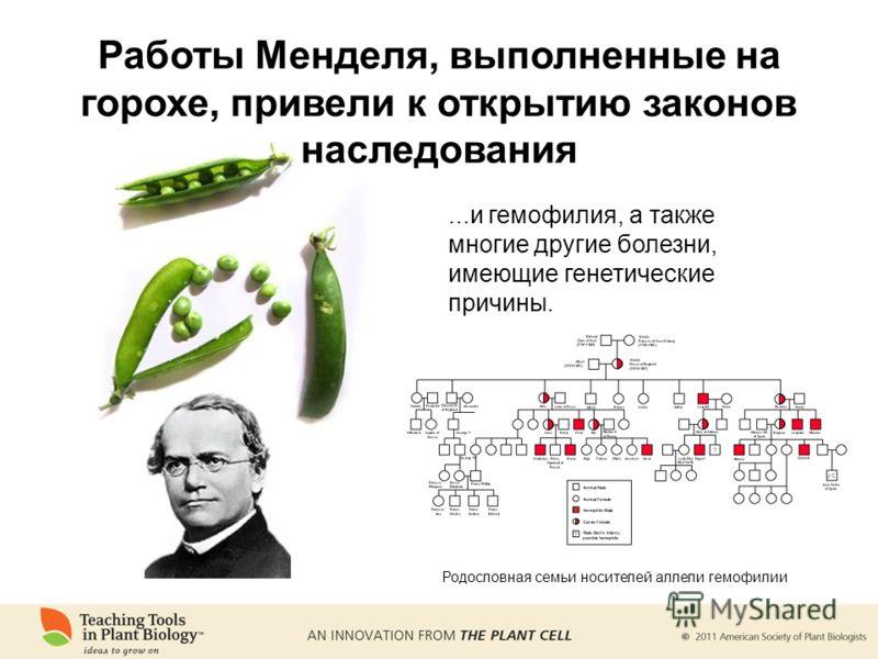 ...и гемофилия, а также многие другие болезни, имеющие генетические причины. Родословная семьи носителей аллели гемофилии Работы Менделя, выполненные на горохе, привели к открытию законов наследования