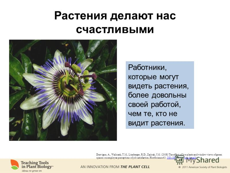 Растения делают нас счастливыми Dravigne, A., Waliczek, T.M., Lineberger, R.D., Zajicek, J.M. (2008) The effect of live plants and window views of green spaces on employee perceptions of job satisfaction. HortScience 43: 183–187. Фото: tom donald183–