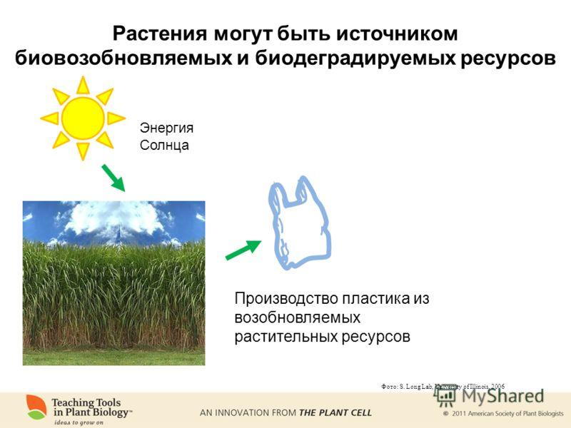 Энергия Солнца Производство пластика из возобновляемых растительных ресурсов Фото: S. Long Lab, University of Illinois, 2006 Растения могут быть источником биовозобновляемых и биодеградируемых ресурсов