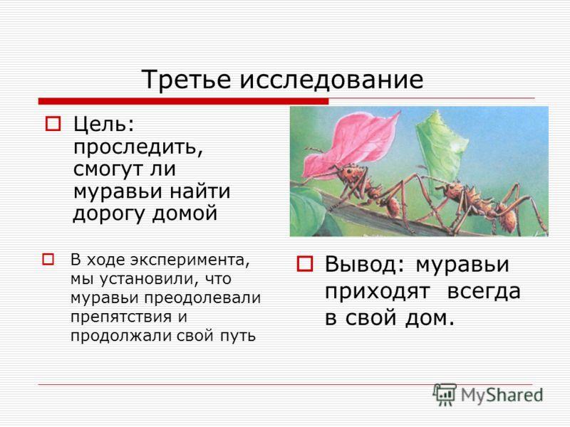 Третье исследование В ходе эксперимента, мы установили, что муравьи преодолевали препятствия и продолжали свой путь Вывод: муравьи приходят всегда в свой дом. Цель: проследить, смогут ли муравьи найти дорогу домой
