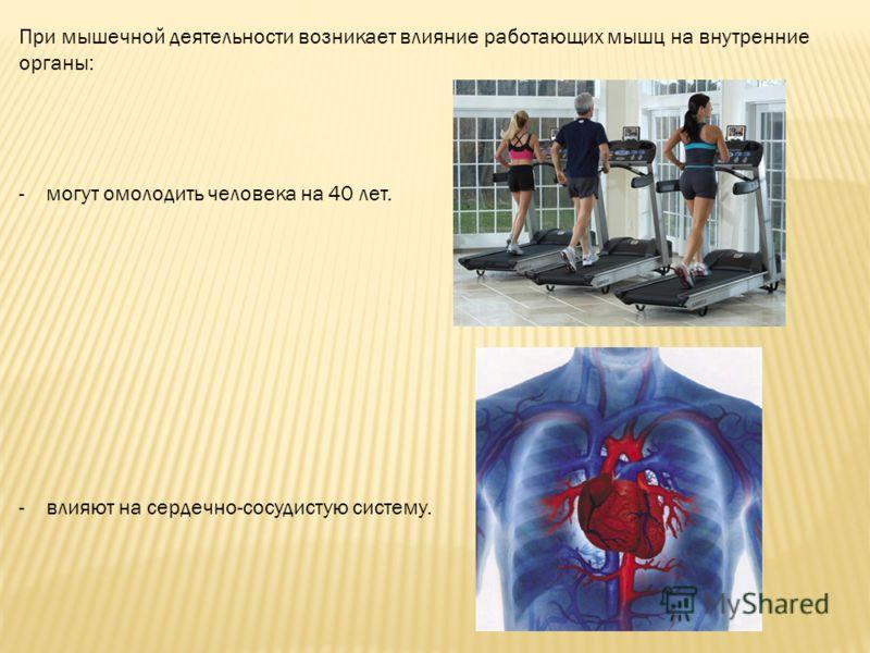 При мышечной деятельности возникает влияние работающих мышц на внутренние органы: -могут омолодить человека на 40 лет. -влияют на сердечно-сосудистую систему.