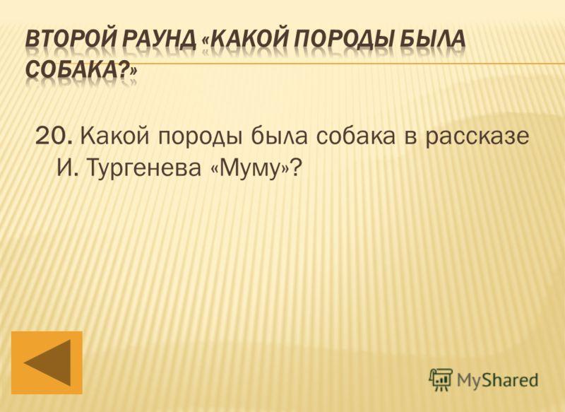 20. Какой породы была собака в рассказе И. Тургенева «Муму»?