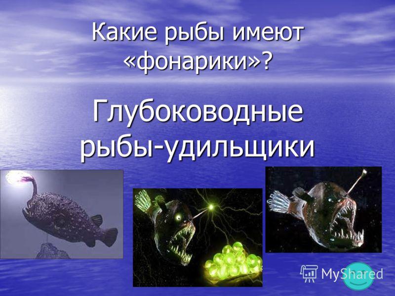 Какие рыбы имеют «фонарики»? Глубоководные рыбы-удильщики