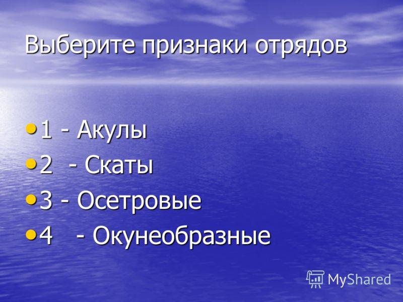 Выберите признаки отрядов 1 - Акулы 1 - Акулы 2 - Скаты 2 - Скаты 3 - Осетровые 3 - Осетровые 4 - Окунеобразные 4 - Окунеобразные