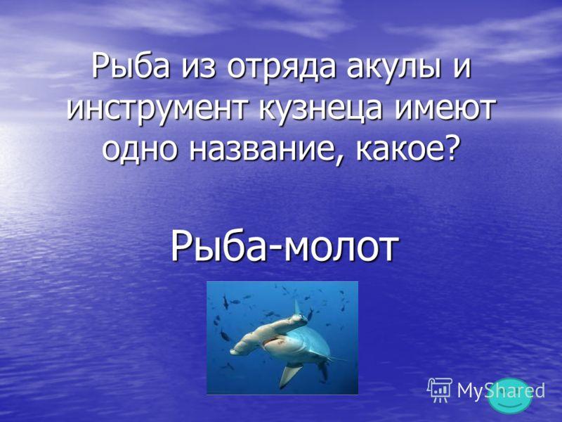 Рыба из отряда акулы и инструмент кузнеца имеют одно название, какое? Рыба-молот