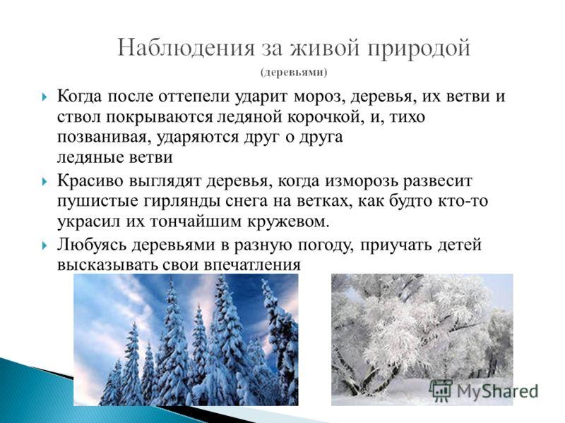 Когда после оттепели ударит мороз, деревья, их ветви и ствол покрываются ледяной корочкой, и, тихо позванивая, ударяются друг о друга ледяные ветви Красиво выглядят деревья, когда изморозь развесит пушистые гирлянды снега на ветках, как будто кто-то