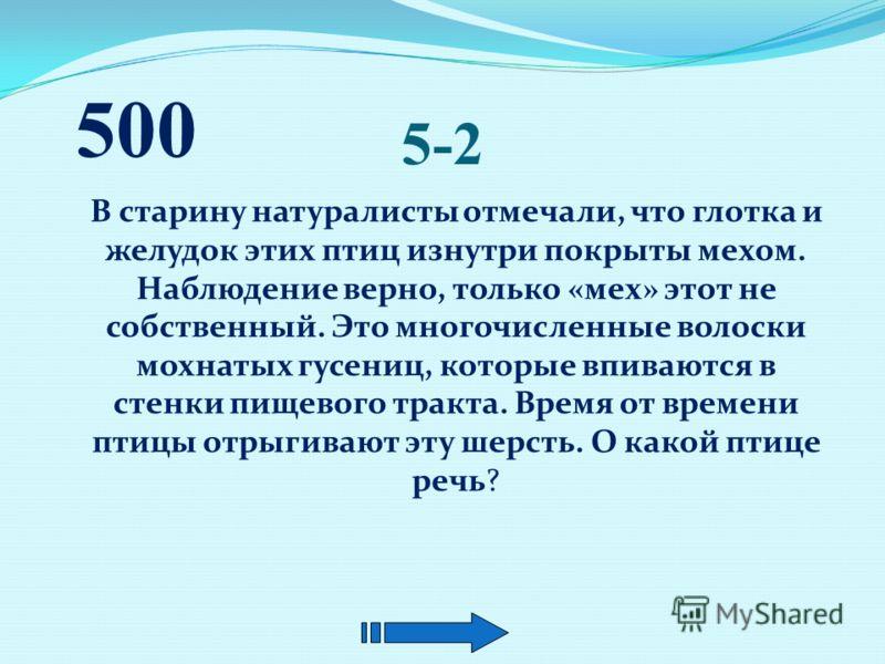 5-1 Какие два дерева- долгожителя являются памятниками природы Адыгеи? 500