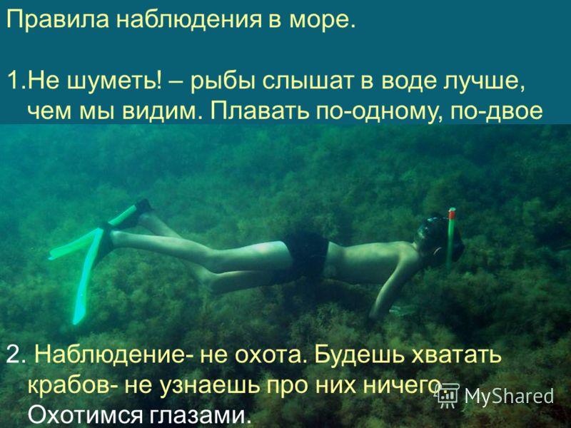 Правила наблюдения в море. 1.Не шуметь! – рыбы слышат в воде лучше, чем мы видим. Плавать по-одному, по-двое 2. Наблюдение- не охота. Будешь хватать крабов- не узнаешь про них ничего. Охотимся глазами.