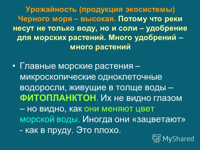 Урожайность (продукция экосистемы) Черного моря – высокая. Потому что реки несут не только воду, но и соли – удобрение для морских растений. Много удобрений – много растений Главные морские растения – микроскопические одноклеточные водоросли, живущие