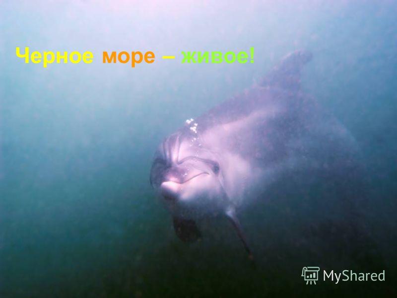 Черное море – живое!