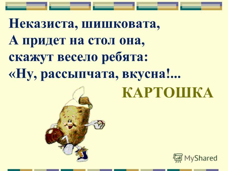 Неказиста, шишковата, А придет на стол она, скажут весело ребята: «Ну, рассыпчата, вкусна!... КАРТОШКА