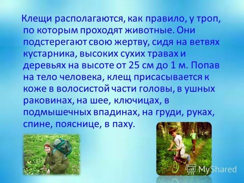 Клещи располагаются, как правило, у троп, по которым проходят животные. Они подстерегают свою жертву, сидя на ветвях кустарника, высоких сухих травах и деревьях на высоте от 25 см до 1 м. Попав на тело человека, клещ присасывается к коже в волосистой