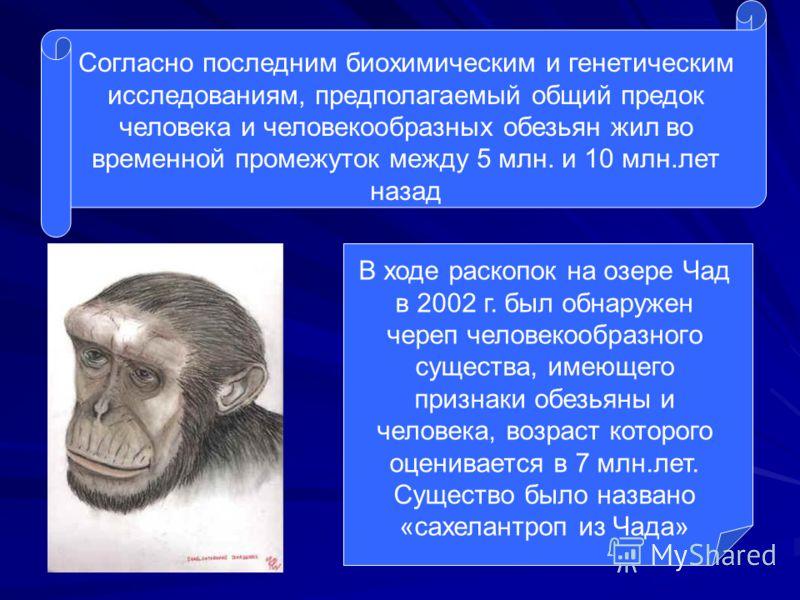 Согласно последним биохимическим и генетическим исследованиям, предполагаемый общий предок человека и человекообразных обезьян жил во временной промежуток между 5 млн. и 10 млн.лет назад В ходе раскопок на озере Чад в 2002 г. был обнаружен череп чело