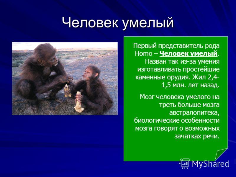 Человек умелый Первый представитель рода Homo – Человек умелый. Назван так из-за умения изготавливать простейшие каменные орудия. Жил 2,4- 1,5 млн. лет назад. Мозг человека умелого на треть больше мозга австралопитека, биологические особенности мозга