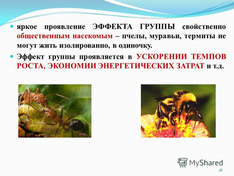 яркое проявление ЭФФЕКТА ГРУППЫ свойственно общественным насекомым – пчелы, муравьи, термиты не могут жить изолированно, в одиночку. Эффект группы проявляется в УСКОРЕНИИ ТЕМПОВ РОСТА, ЭКОНОМИИ ЭНЕРГЕТИЧЕСКИХ ЗАТРАТ и т.д. 18