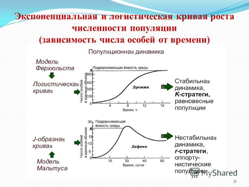 Экспоненциальная и логистическая кривая роста численности популяции (зависимость числа особей от времени) 31