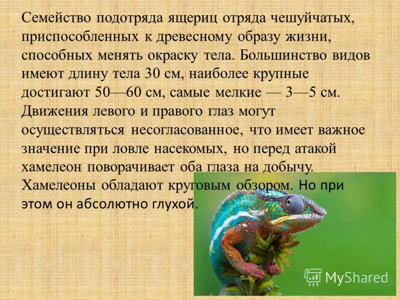 Семейство подотряда ящериц отряда чешуйчатых, приспособленных к древесному образу жизни, способных менять окраску тела. Большинство видов имеют длину тела 30 см, наиболее крупные достигают 5060 см, самые мелкие 35 см. Движения левого и правого глаз м
