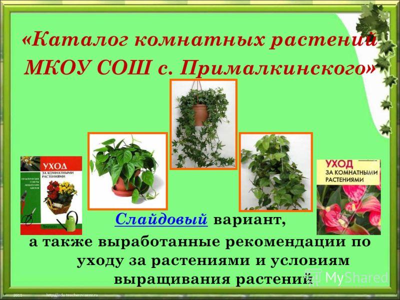 «Каталог комнатных растений МКОУ СОШ с. Прималкинского» Слайдовый Слайдовый вариант, а также выработанные рекомендации по уходу за растениями и условиям выращивания растений