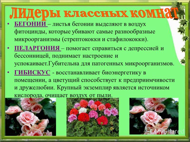 БЕГОНИИ – листья бегонии выделяют в воздух фитоцинды, которые убивают самые разнообразные микроорганизмы (стрептококки и стафилококки). ПЕЛАРГОНИЯ – помогает справиться с депрессией и бессонницей, поднимает настроение и успокаивает.Губительна для пат