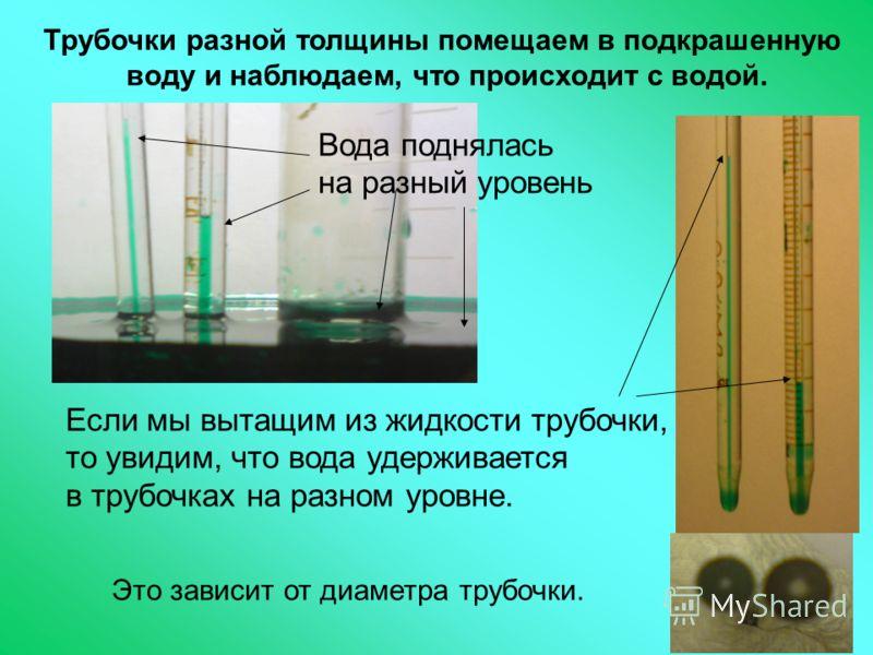 Трубочки разной толщины помещаем в подкрашенную воду и наблюдаем, что происходит с водой. Вода поднялась на разный уровень Если мы вытащим из жидкости трубочки, то увидим, что вода удерживается в трубочках на разном уровне. Это зависит от диаметра тр