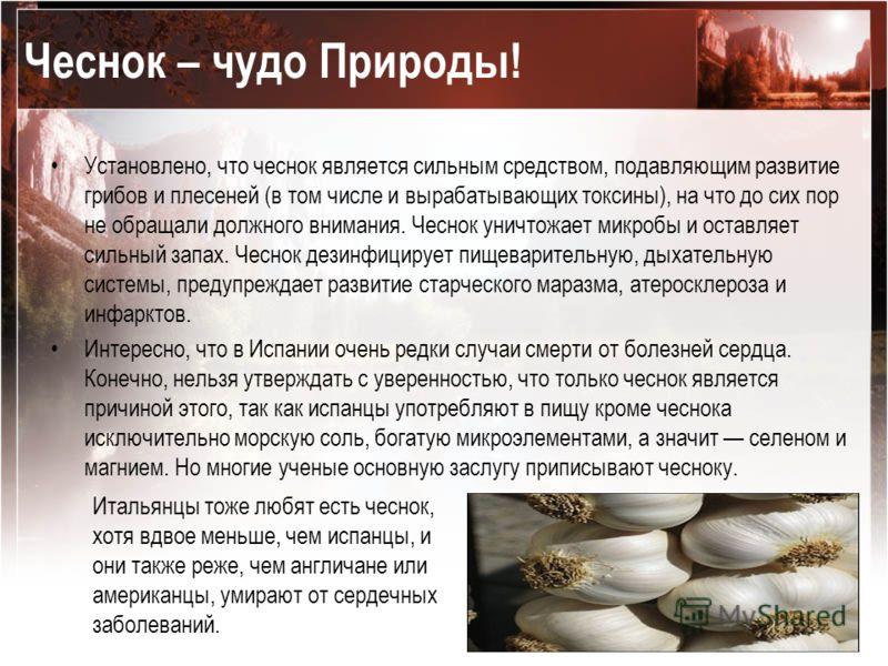 Чеснок – чудо Природы! Установлено, что чеснок является сильным средством, подавляющим развитие грибов и плесеней (в том числе и вырабатывающих токсины), на что до сих пор не обращали должного внимания. Чеснок уничтожает микробы и оставляет сильный з