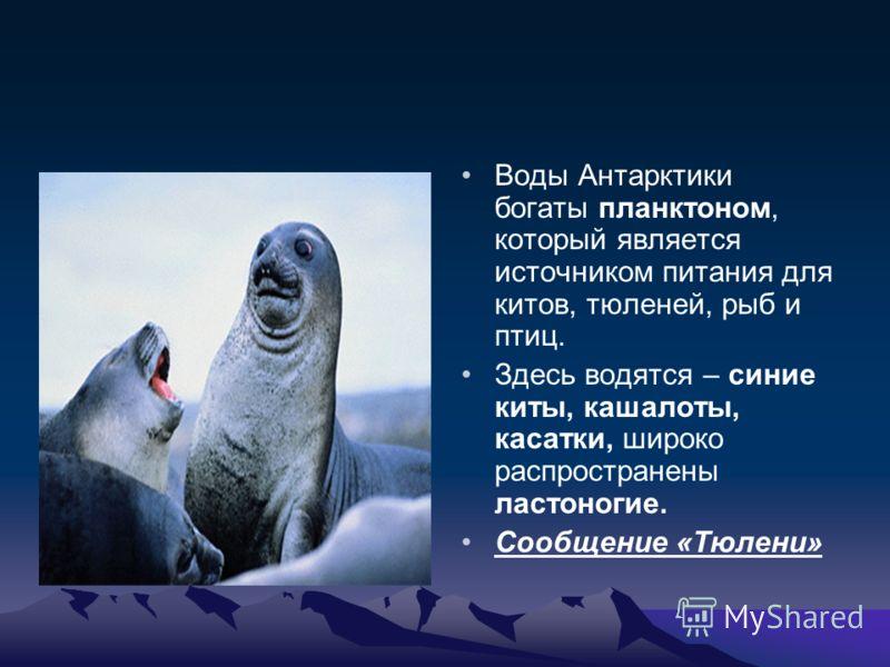 Воды Антарктики богаты планктоном, который является источником питания для китов, тюленей, рыб и птиц. Здесь водятся – синие киты, кашалоты, касатки, широко распространены ластоногие. Сообщение «Тюлени»