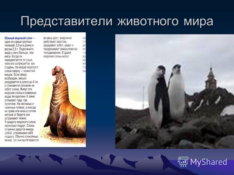 Представители животного мира