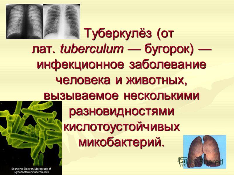 Туберкулёз (от лат. tuberculum бугорок) инфекционное заболевание человека и животных, вызываемое несколькими разновидностями кислотоустойчивых микобактерий. Туберкулёз (от лат. tuberculum бугорок) инфекционное заболевание человека и животных, вызывае