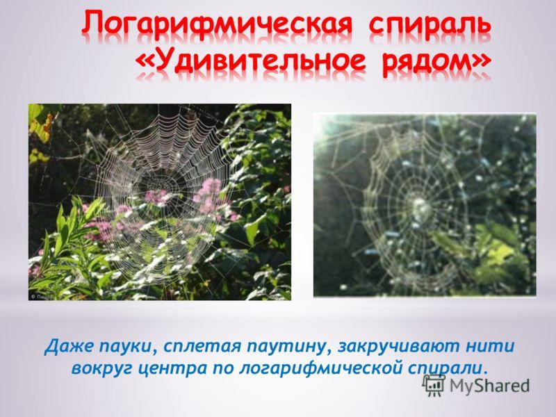 Даже пауки, сплетая паутину, закручивают нити вокруг центра по логарифмической спирали.