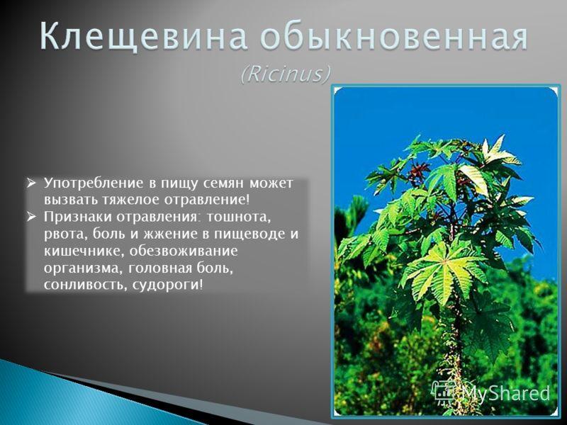 Погода в москве на лето 2011