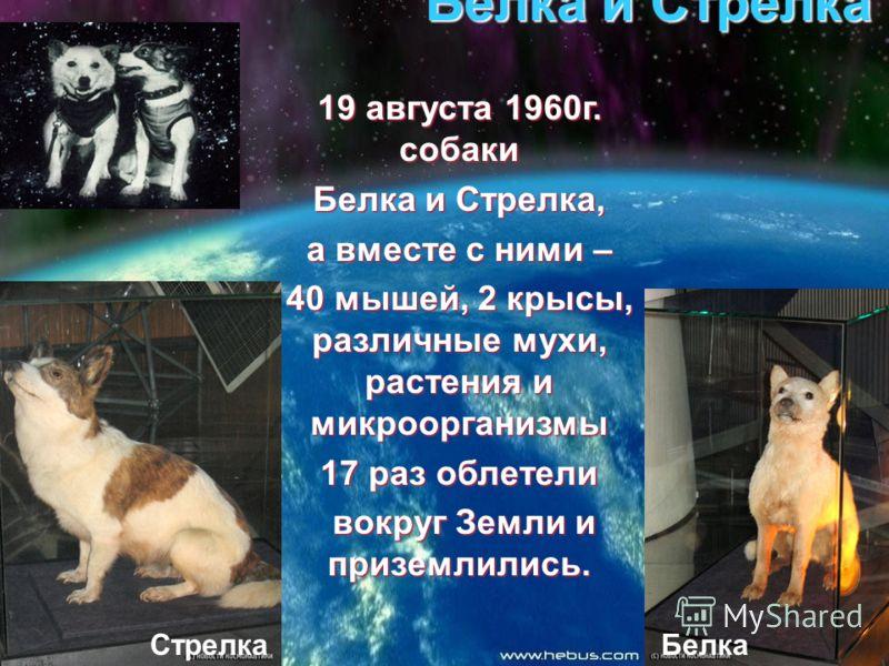 Белка и Стрелка 19 августа 1960г. собаки Белка и Стрелка, а вместе с ними – 40 мышей, 2 крысы, различные мухи, растения и микроорганизмы 17 раз облетели вокруг Земли и приземлились. вокруг Земли и приземлились. СтрелкаБелка