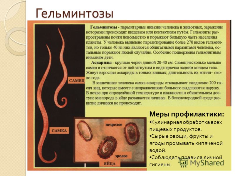 Гельминтозы Меры профилактики : Кулинарная обработка всех пищевых продуктов. Сырые овощи, фрукты и ягоды промывать кипяченой водой. Соблюдать правила личной гигиены.