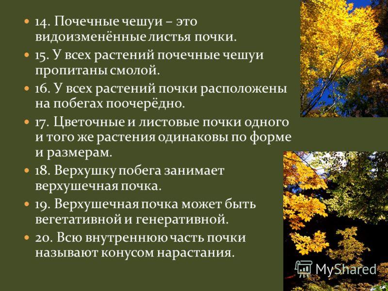 14. Почечные чешуи – это видоизменённые листья почки. 15. У всех растений почечные чешуи пропитаны смолой. 16. У всех растений почки расположены на побегах поочерёдно. 17. Цветочные и листовые почки одного и того же растения одинаковы по форме и разм