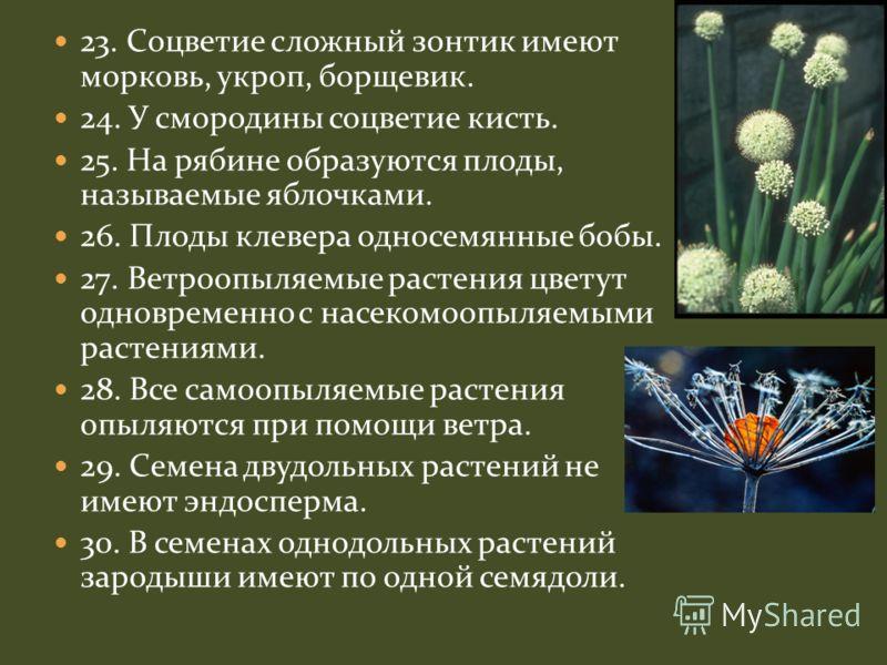23. Соцветие сложный зонтик имеют морковь, укроп, борщевик. 24. У смородины соцветие кисть. 25. На рябине образуются плоды, называемые яблочками. 26. Плоды клевера односемянные бобы. 27. Ветроопыляемые растения цветут одновременно с насекомоопыляемым