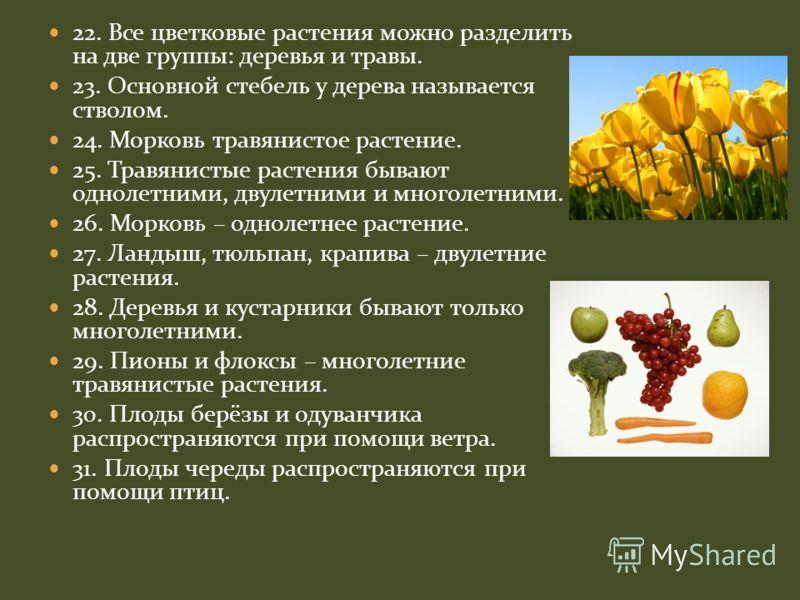 22. Все цветковые растения можно разделить на две группы: деревья и травы. 23. Основной стебель у дерева называется стволом. 24. Морковь травянистое растение. 25. Травянистые растения бывают однолетними, двулетними и многолетними. 26. Морковь – однол