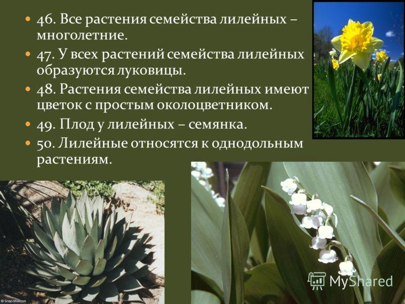 46. Все растения семейства лилейных – многолетние. 47. У всех растений семейства лилейных образуются луковицы. 48. Растения семейства лилейных имеют цветок с простым околоцветником. 49. Плод у лилейных – семянка. 50. Лилейные относятся к однодольным