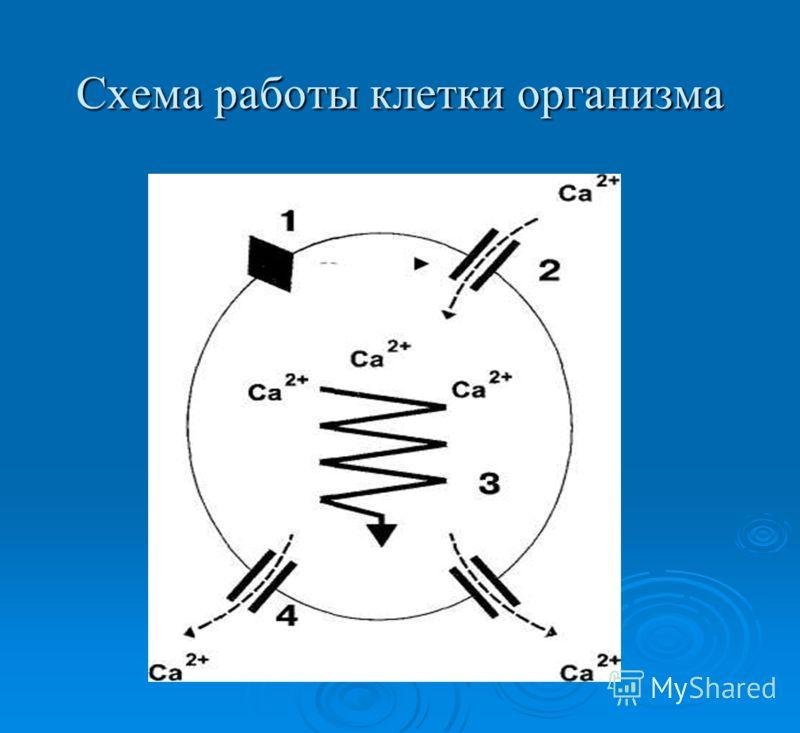Схема работы клетки организма
