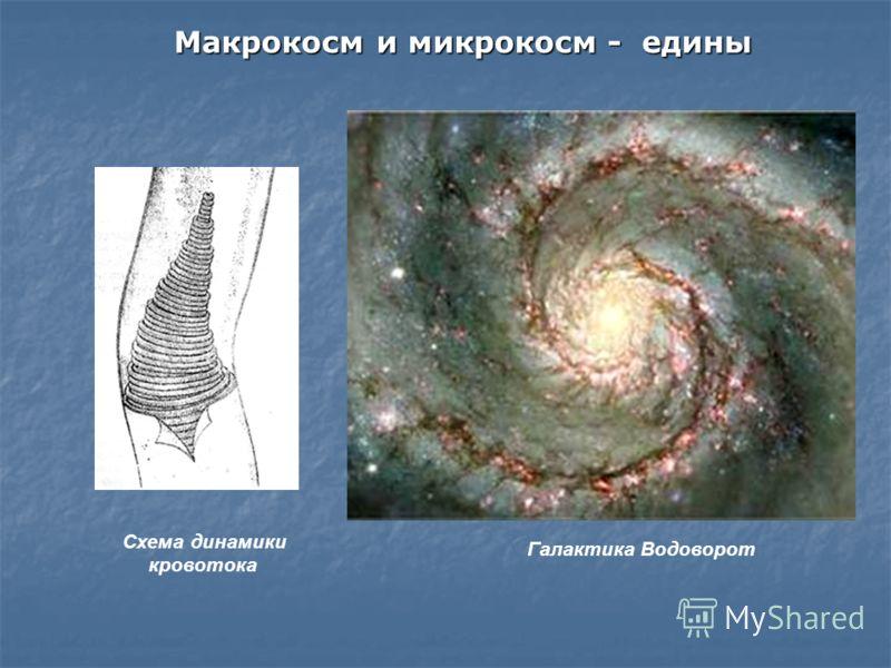 Схема динамики кровотока Галактика Водоворот Макрокосм и микрокосм - едины