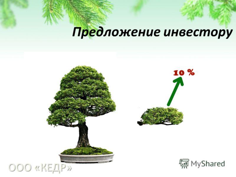 Предложение инвестору ООО «КЕДР»