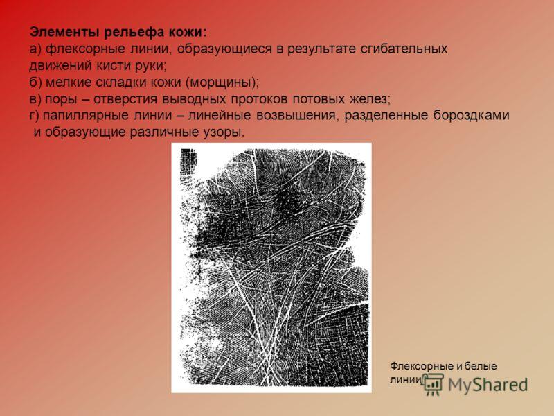 Элементы рельефа кожи: а) флексорные линии, образующиеся в результате сгибательных движений кисти руки; б) мелкие складки кожи (морщины); в) поры – отверстия выводных протоков потовых желез; г) папиллярные линии – линейные возвышения, разделенные бор