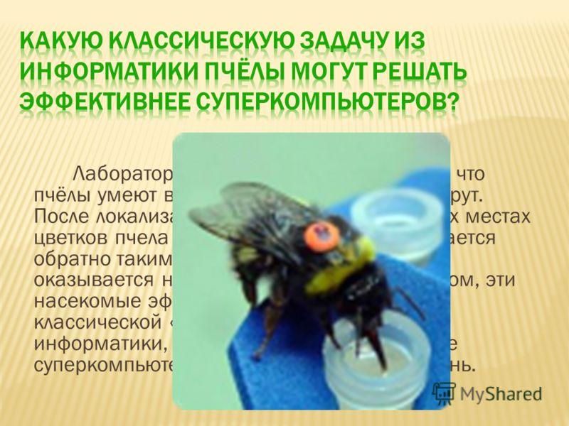 Лабораторные исследования показали, что пчёлы умеют выбирать оптимальный маршрут. После локализации расставленных в разных местах цветков пчела совершает облёт и возвращается обратно таким образом, что итоговый путь оказывается наикратчайшим. Таким о