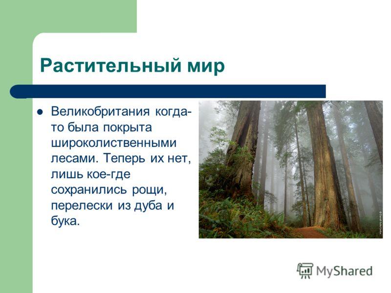 Растительный мир Великобритания когда- то была покрыта широколиственными лесами. Теперь их нет, лишь кое-где сохранились рощи, перелески из дуба и бука.