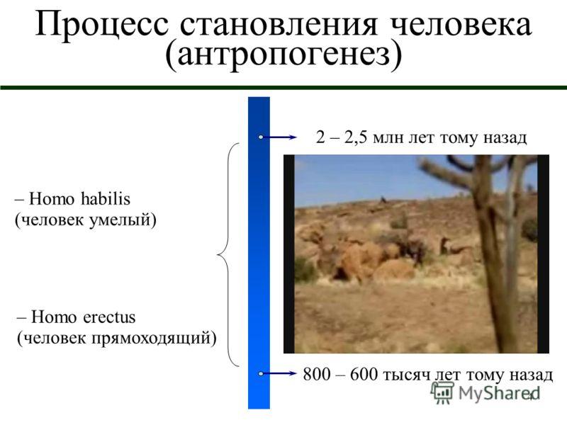 4 Процесс становления человека (антропогенез) 2 – 2,5 млн лет тому назад 800 – 600 тысяч лет тому назад – Homo habilis (человек умелый) – Homo erectus (человек прямоходящий)